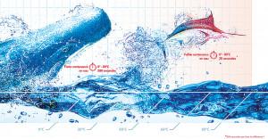 Les avantages de la faible contenance en eau
