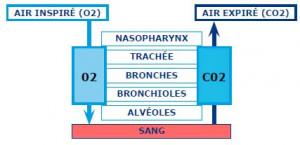 Qualité d'air : les bases, le CO2 et les odeurs
