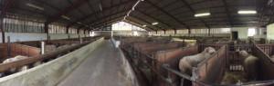 La Simulation Thermique Dynamique à la rescousse des béliers
