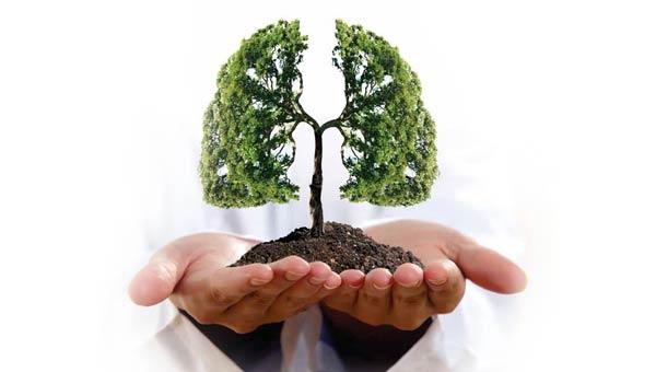 poumons plantes