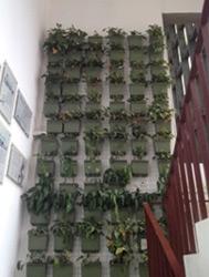 Végétalisation des escaliers