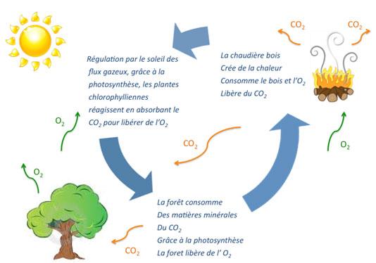 Schéma cycle du carbone