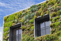 murs végétalisés Soprema