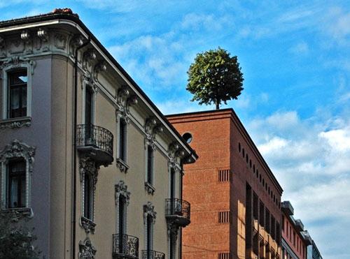 arbre urbain