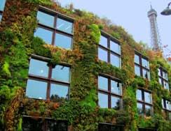 Mur végétal en mode de croissance hydroponique