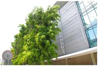 Exemple de protection solaire par le végétal