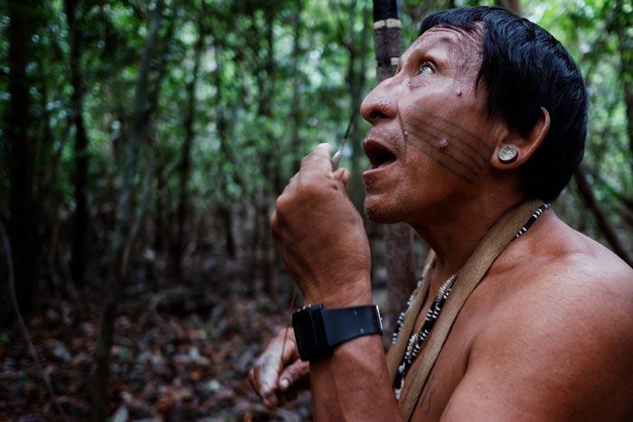 réchauffement climatique amazonie